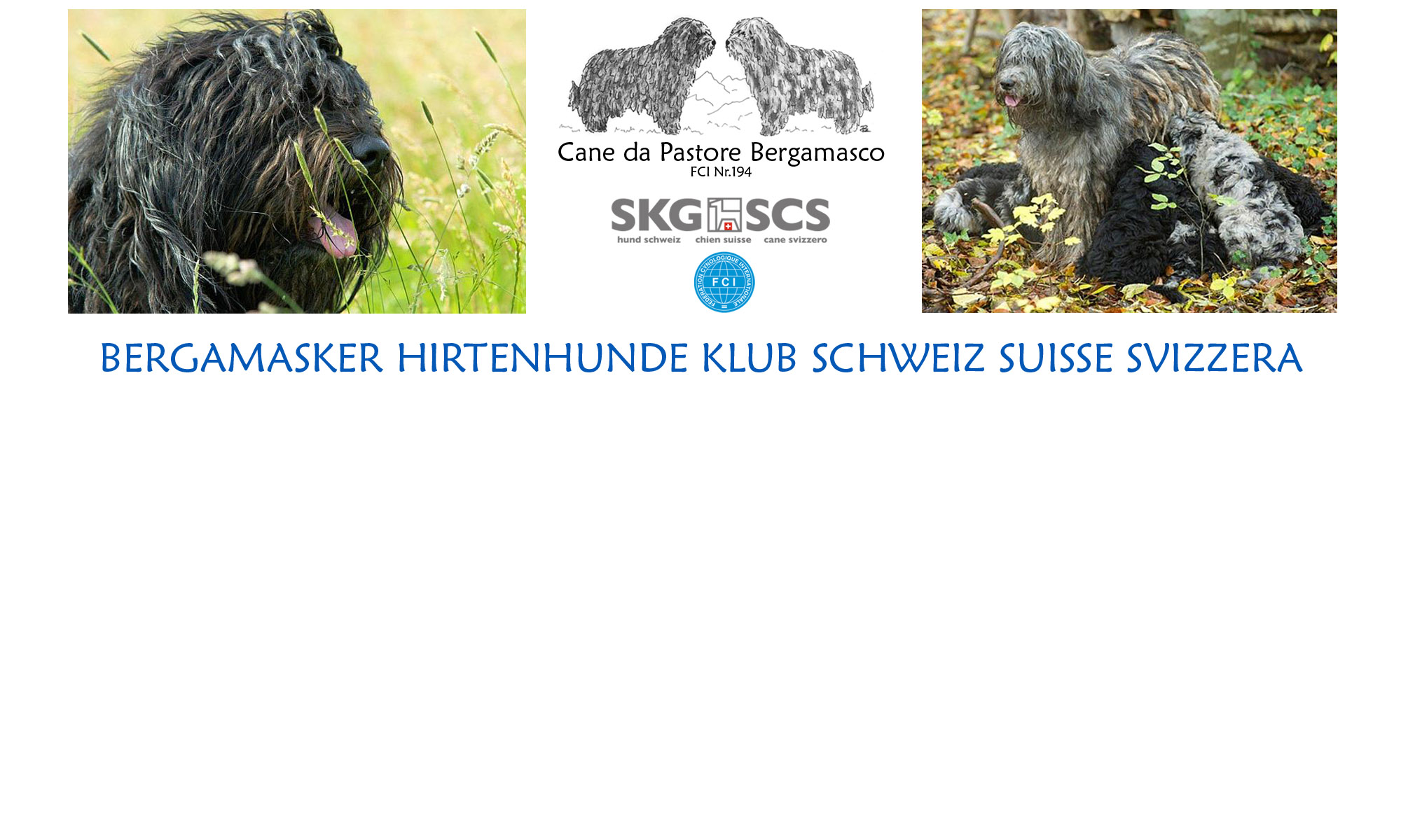 Bergamasker Hirtenhunde Klub Schweiz