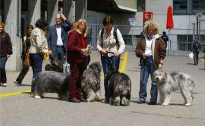 Ankoerung_Hunde